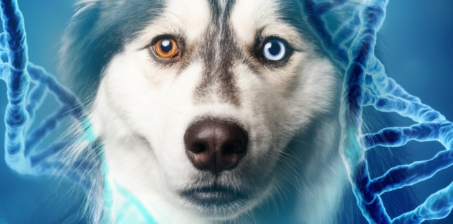 Facts About DNA Testing For Dogs